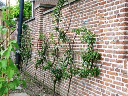 leifruitboom